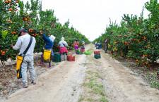 MIDAGRI:Conforman Grupo de Trabajo para elaborar reglamento de Registro de Cooperativas Agrarias
