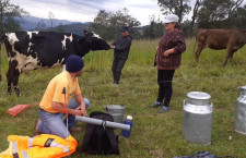 Proyecto ganadero en San Pablo registra 324 asistencias técnicas
